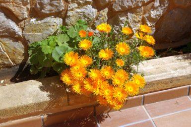 Finca Cas Poble - Blumen auf der Finca