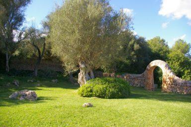 Finca Can Gall - alter Olivenbaum im Garten