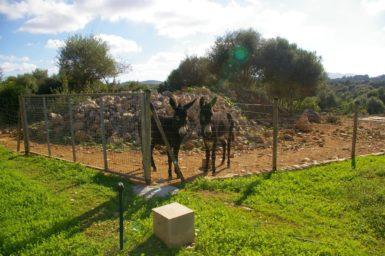 Finca Manolo - Esel hinten auf dem Grundstück
