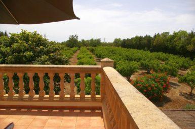 Finca Sa Taulada - Ausblick in den Orangengarten