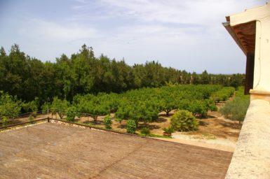 Finca Sa Taulada - viele Orangenbäume im Garten