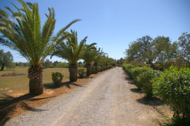 Zufahrt zur Finca Son Cosme Pons