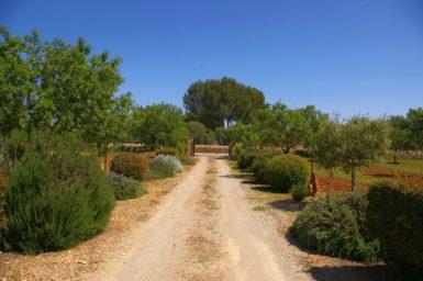 Finca Sa Bassa Seca - Zufahrt zur Finca