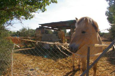 Das Pferd der Finca