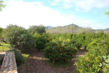 Orangengarten in der Finca Limonera