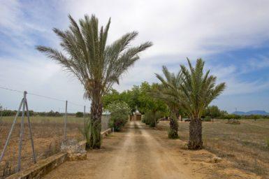 Finca Zufahrt mit Palmenallee